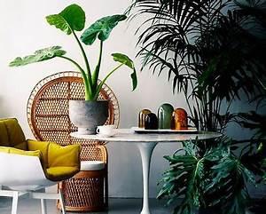 Palmen Für Die Wohnung : bringen sie ihre wohnung auf die palme sweet home ~ Markanthonyermac.com Haus und Dekorationen