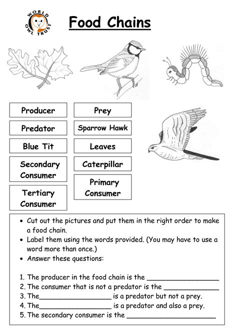 Food Chain Worksheet High School Pdf  Food Chain Lesson Plans And Ideas Brainpop Educatorswhat