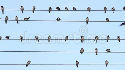 8,514 likes · 26 talking about this. Birds On The Wire Sit Like Music Notes Stock Footage - Video of nature, autumn: 101287678
