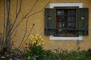 Images Gratuites Bois Maison Fleur Fentre Mur