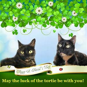 Happy St. Patrick's Day 2016 - The Conscious Cat