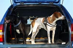 Möbel Transportieren Tipps : autofahren mit hunden ratgeber und tipps von planet hund ~ Markanthonyermac.com Haus und Dekorationen