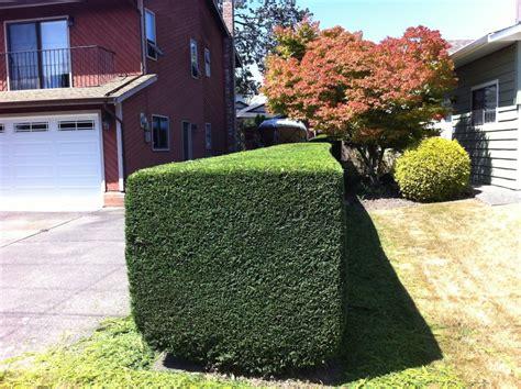 cost  prune  hedge