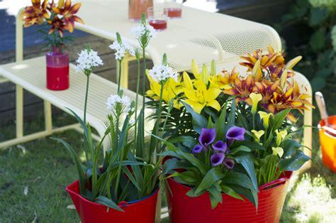 plante de jardin du mois de juillet bulbes d 233 t 233 en pot le calla le lis et l ornithogale