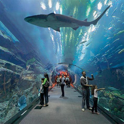 dubai mall aquarium underwater zoo  arabian