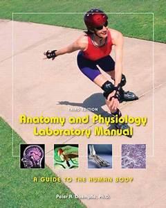 9781256640080  Anatomy  U0026 Physiology Laboratory Manual  A