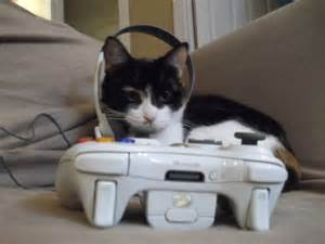 cat controller animals with controllers how i failed trying to