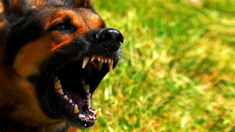 loud dog barking sound effect youtube