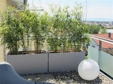 Bambus Für Balkon by Balkon Sichtschutz Blumen