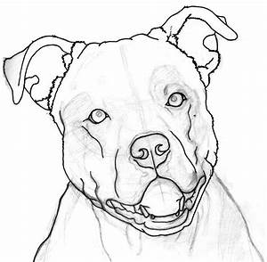 how to draw a pitbull face - Google Search | drawing ...