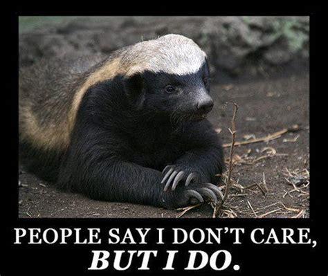 Badger Memes - honey badger meh ro
