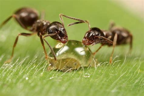 ant facts  kids ant habitat ant diet