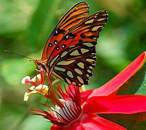 Rules of the Jungle: Symbiotic relationship of butterfly ...