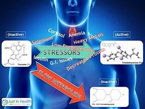 Adrenal Fatigue Treatment And Symptoms