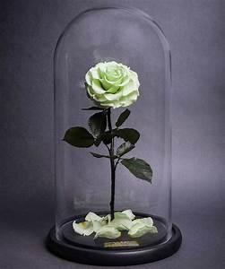 Rose Eternelle Sous Cloche : roses immortelles la belle et la b te ~ Teatrodelosmanantiales.com Idées de Décoration