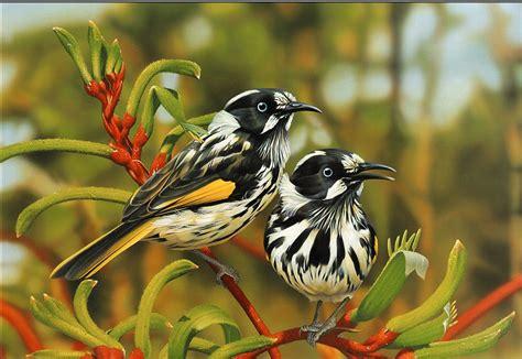 Top 10 Beautiful Animal Wallpapers - most 10 beautiful birds hd wallpaper 2013 top hd