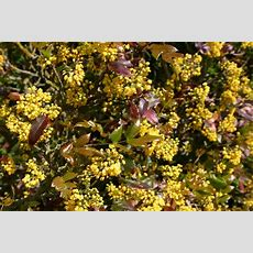 Spring Flowering Shrubs Tinybloomingplaces