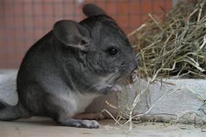 Haustiere Für Kleine Wohnung : zeigt doch mal eure haustiere uhrforum seite 100 ~ Lizthompson.info Haus und Dekorationen