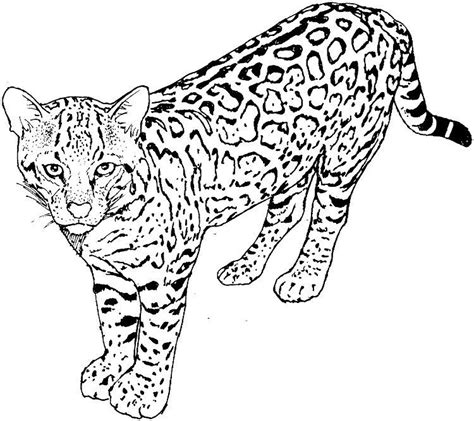 Real Life Cat Coloring Pages Download or print the image