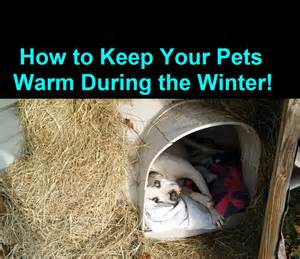 how to keep a warm during winter cold weather warm