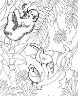 Zoo Coloring Pages Animals Printable sketch template
