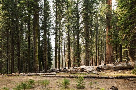 stock photo  conifer daylight environment