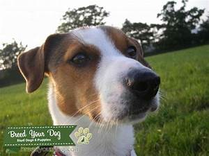 brown black and white dog breeds brown and white dog breeds