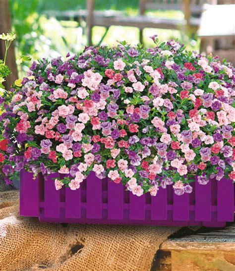 trixi bloem trixi 174 mix pink petticoat bloem bloembakken met