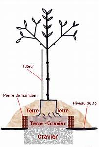 a quelle periode planter un olivier With comment amenager mon jardin 2 jardins mediterraneens pierijardins fr