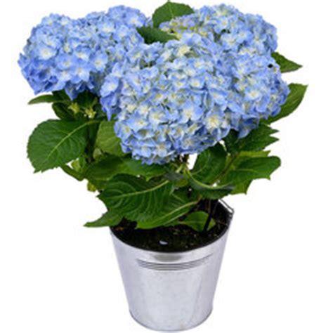 plantes et arbustes livraison 224 domicile aquarelle be