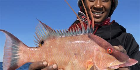 florida fishing winter hogfish clearwater report