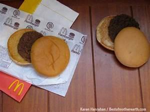 How long do you think you can keep a McDonald hamburger ...