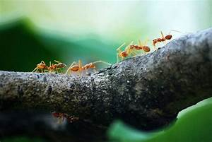 do ants sleep not the way you d think smart nora