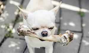 10 Alimentos Que No Debe Comer Un Perro  U00a1lo Pueden Matar