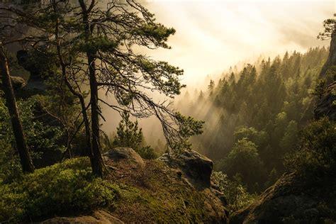 elbe sandstone switzerland    forest