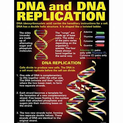 Dna Heredity Poster