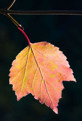 autumn close  macro   life photography tips