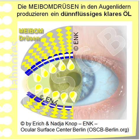 blick auf meibomdruesen ocular surface center berlin