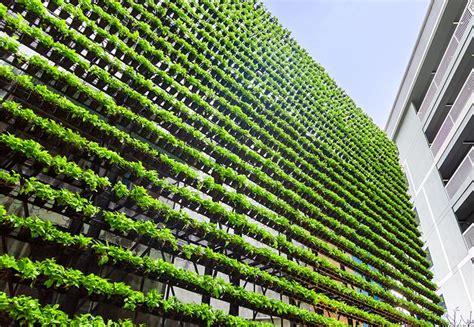 Vertikal Garten Pflanzen by 353 Best Ze Pflanzen Garten Images On