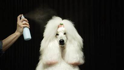Grooming Dog Rona Jess Medium