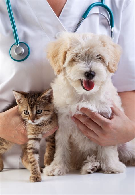 Your Pet Might Have Ringworm If  Pet Sitting And Dog