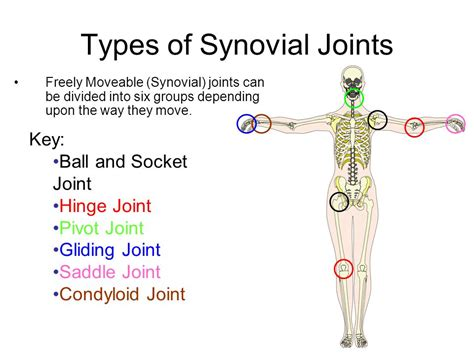 The Types Of Joints And Movement