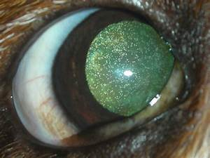 Vision Care For AnimalsGallery of Eye Diseases