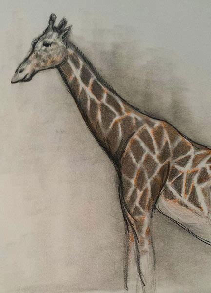 field trip drawing animals   zoo artists network