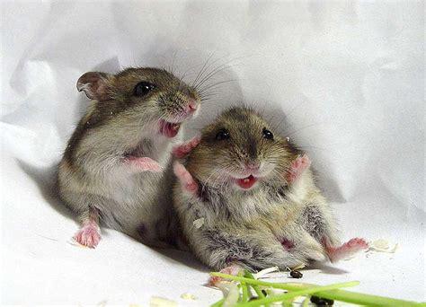 Baby Animal Wallpapers - free baby animal wallpaper wallpapersafari
