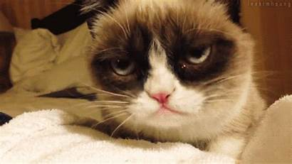 Animated Cat Giphy Gifs Cats Grumpy Funny