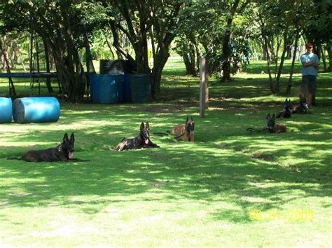 Dog Parks Costa Rica Happiness For Your Pet The