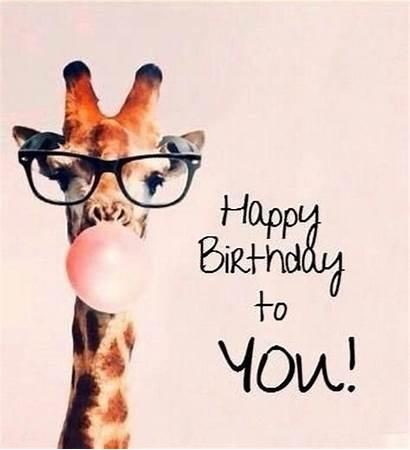 Birthday Giraffe Memes Happy Boyfriend Gum Bubble