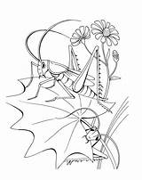 Coloring Grasshopper Grasshoppers sketch template