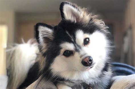 Dog Crossbreed